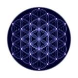 Cosmic Flower of Life With Stars on White Background