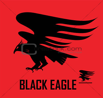 Black eagle, eagle, flying falcon