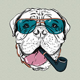 vector funny cartoon hipster dog Bullmastiff