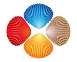 Four different colored seashells