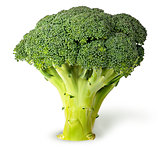 Large inflorescences of fresh broccoli