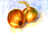 Watercolor onions illustration hand drawn