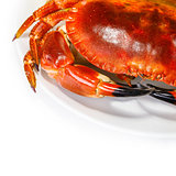Tasty prepared crab