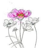 Line ink drawing of cosmos flower