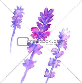 Watercolor lavender set
