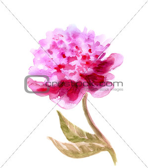 Watercolor Flower Peony