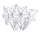 Hand ink drawing bellflower