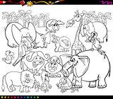 safari animals coloring book
