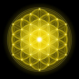 Golden Flower of Life on Black Background