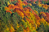 Beautiful view of autumn trees with colorful foliage