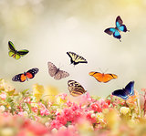 Flowers and Butterflies