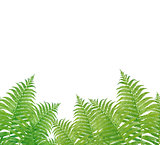 Green Fern Leaves