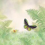 Green Butterfly and Plants