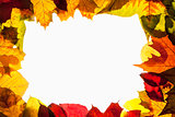 Border Frame of Colorful Autumn Leaves - Isolated on White
