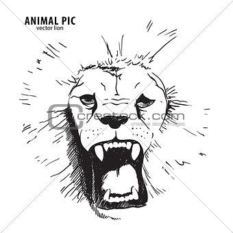 Sketch lion head