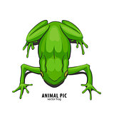 Illutration of frog