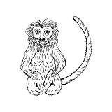 hand draw a monkey