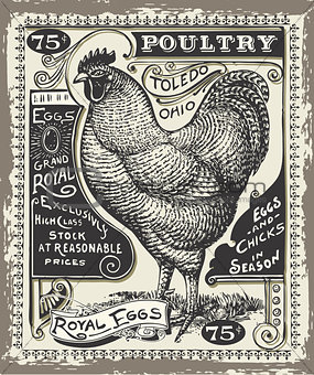Advertising Poultry 02 Vintage 2D