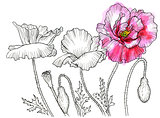 Line ink drawing of flower