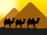 camels in the desert at the pyramids