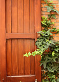 Wooden shutter and ivy on brick wall