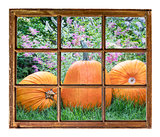 garden with pumpkin window view