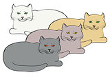 four different colored british cats