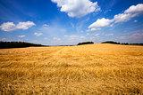 slanted wheat. harvest company