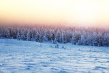 Beautiful landscape of sunset in winter forest