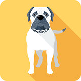 dog Bullmastiff icon flat design