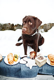 Very Sad Labrador and Holiday Treats