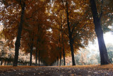 Autumn landscape, Herrenhauser Allee in Hannover, Germany
