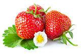 Fresh strawberry with green leaf and flower