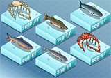 Fishes 01 Tiles Isometric