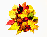 Closeup of Different Autumn Leaves - Isolated on White