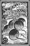 Turnip 01 Vintage