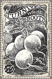 Turnip 02 Vintage