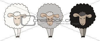 Three Sheep Illustration.