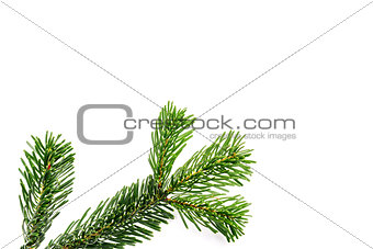green branches on white background