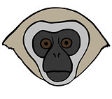 Vector Ornate Monkey Head.