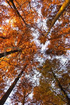 Autumn colors at the park