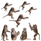 many views of Baboon in differents size and position