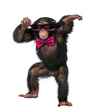 Young Chimpanzee wearing glasses and a bow tie, dancing in front