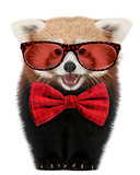 Young Red panda wearing glasses and a bow tie in front of white