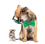 Chihuahua wearing round glasses ,sitting and looking at a mouse