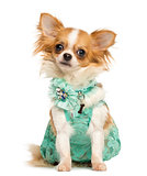 Chihuahua wearing a green dress sitting, looking at the camera,