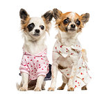 Two dressed-up Chihuahuas sitting, 9 months old, isolated on whi
