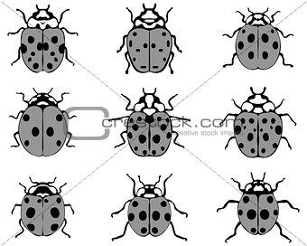gray ladybugs
