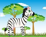 Animal zebra in savannah