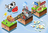 Beef Chain Infographic Isometric